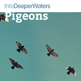 itdw-mp3-artwork-pigeons