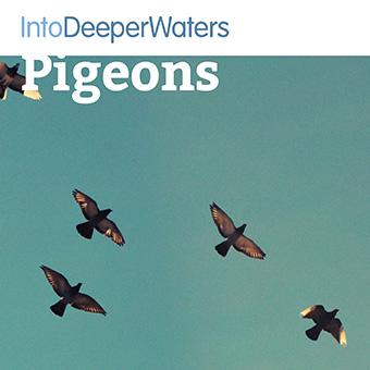 itdw-mp3-artwork-pigeons