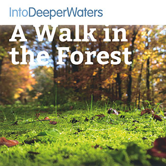 itdw-mp3-artwork-walkforest