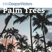 itdw-mp3-artwork-palmtrees