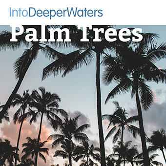 itdw-mp3-artwork-palmtrees