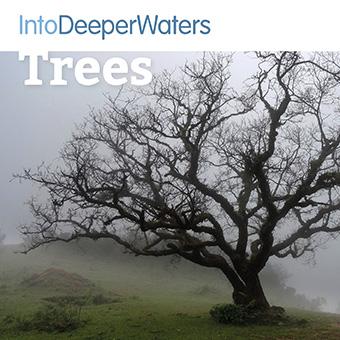 itdw-mp3-artwork-tree