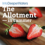itdw-mp3-artwork72-allotmentsummer