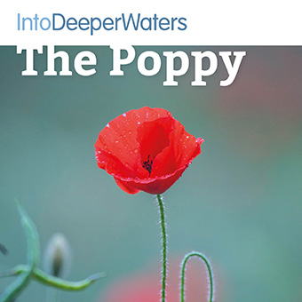 itdw-mp3-artwork72-thepoppy
